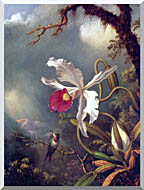 Martin Johnson Heade An Amethyst Hummingbird With A White Orchid stretched canvas art