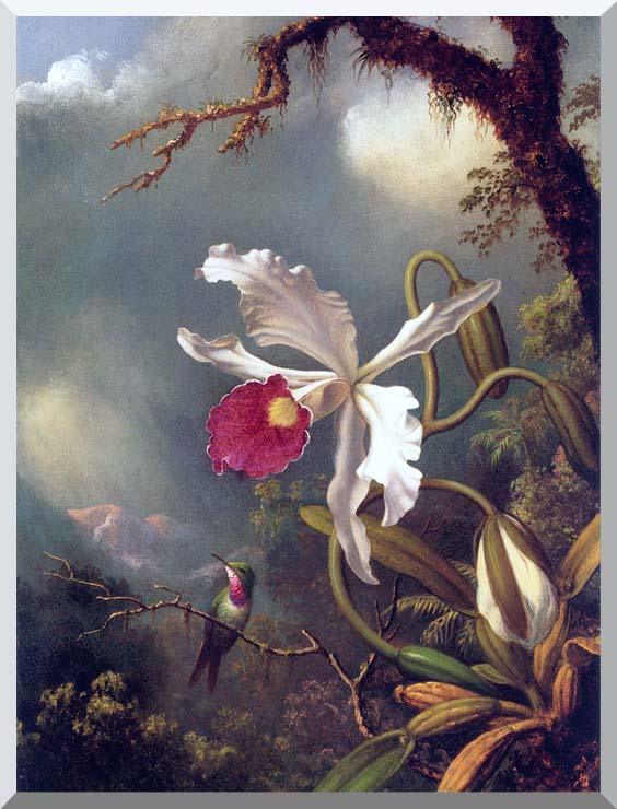 Martin Johnson Heade An Amethyst Hummingbird with a White Orchid stretched canvas art print