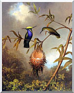 Martin Johnson Heade Black Breasted Plovercrest stretched canvas art