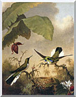 Martin Johnson Heade Black Eared Fairy stretched canvas art