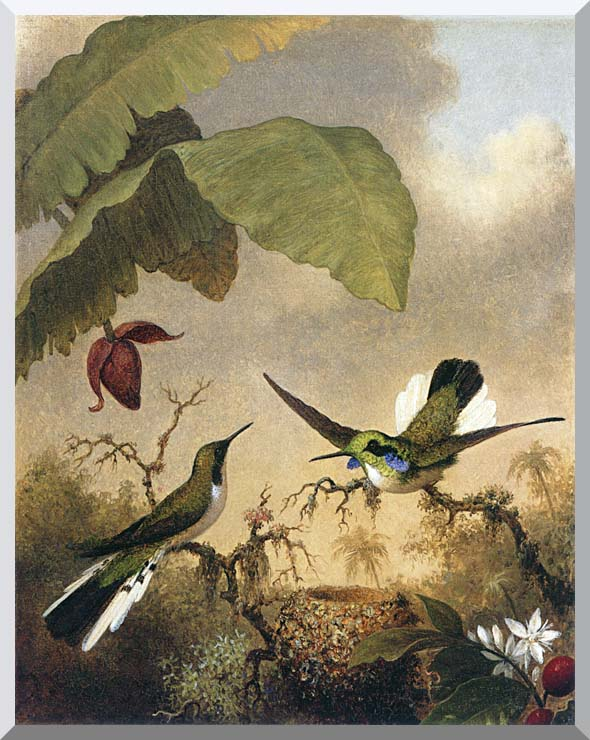 Martin Johnson Heade Black Eared Fairy stretched canvas art print