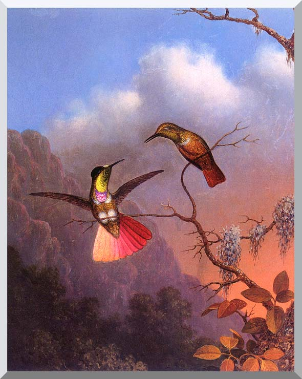 Martin Johnson Heade Hooded Visorbearer stretched canvas art print