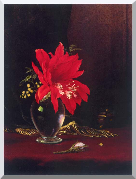 Martin Johnson Heade Red Flower in a Vase stretched canvas art print