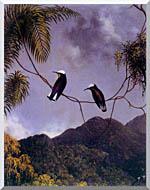 Snowcap Hummingbirds Stretched Canvas Art