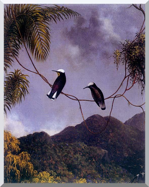 Martin Johnson Heade Snowcap Hummingbirds stretched canvas art print