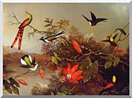 Martin Johnson Heade Tropical Landscape With Ten Hummingbirds stretched canvas art