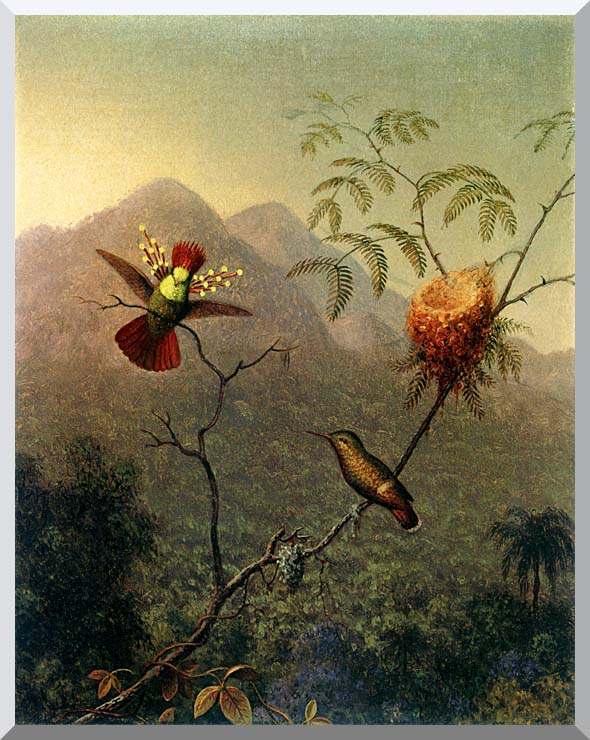 Martin Johnson Heade Tufted Coquette stretched canvas art print
