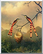 Martin Johnson Heade Two Hummingbirds With Their Young stretched canvas art