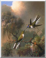 Martin Johnson Heade Two Sungems On A Branch stretched canvas art