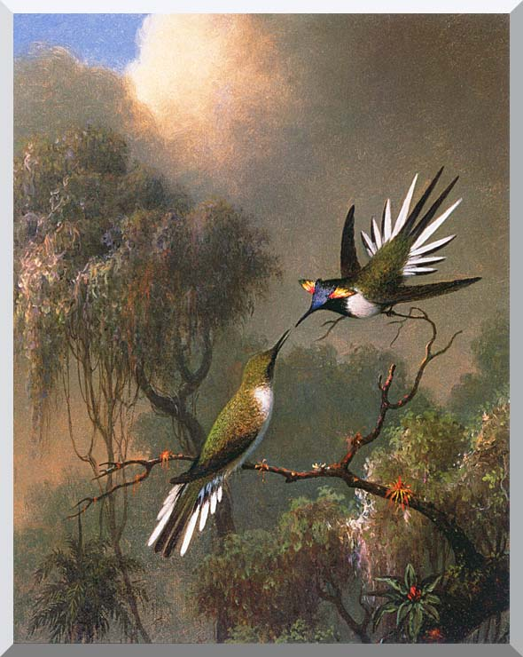 Martin Johnson Heade Two Sungems on a Branch stretched canvas art print