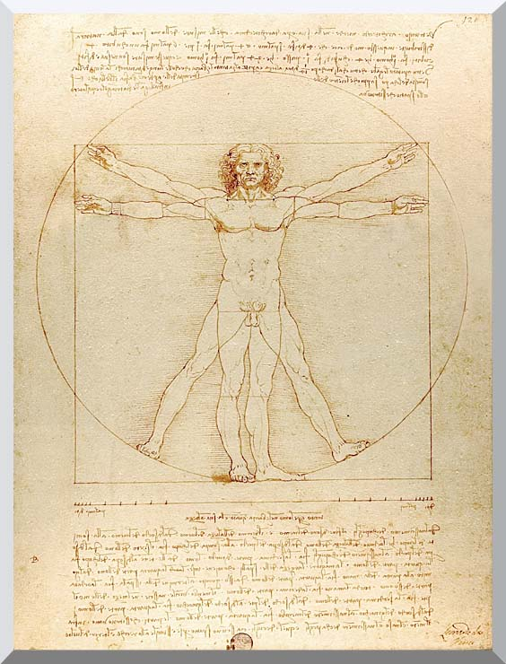 Leonardo Da Vinci Vitruvian Man stretched canvas art print