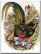 John Gould Quetzal stretched canvas art