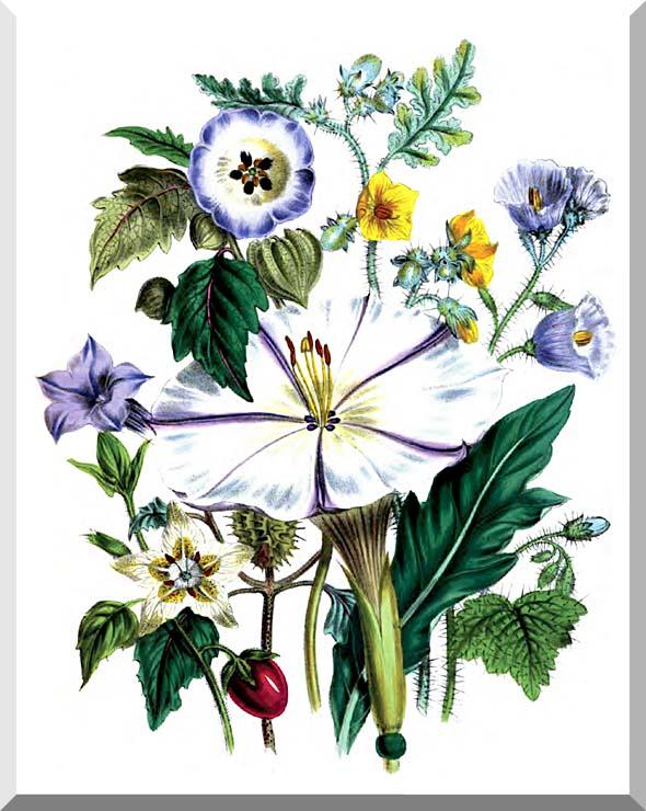 Jane Loudon Flower Art Print stretched canvas art print