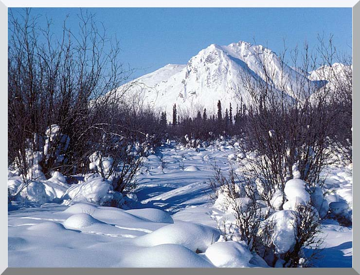 U S Fish and Wildlife Service Arctic Refuge in Winter stretched canvas art print