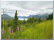 U S Fish And Wildlife Service Hillside With Fireweed stretched canvas art