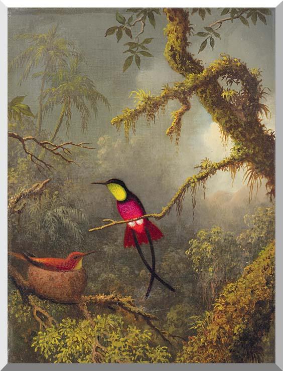 Martin Johnson Heade A Pair of Nesting Crimson Topaz Hummingbirds stretched canvas art print