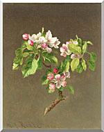 Martin Johnson Heade Apple Blossoms stretched canvas art