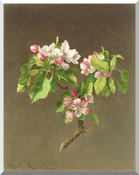 Martin Johnson Heade Apple Blossoms stretched canvas art print