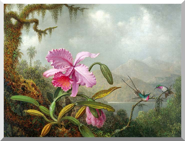 Martin Johnson Heade Orchids and Hummingbirds stretched canvas art print
