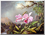 Martin Johnson Heade Study Of An Orchid stretched canvas art