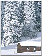 Visions of America Snow Covered Wooden Cabin In Forest California stretched canvas art