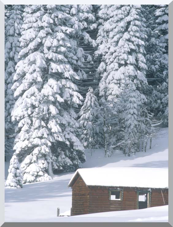 Visions of America Snow Covered Wooden Cabin in Forest, California stretched canvas art print