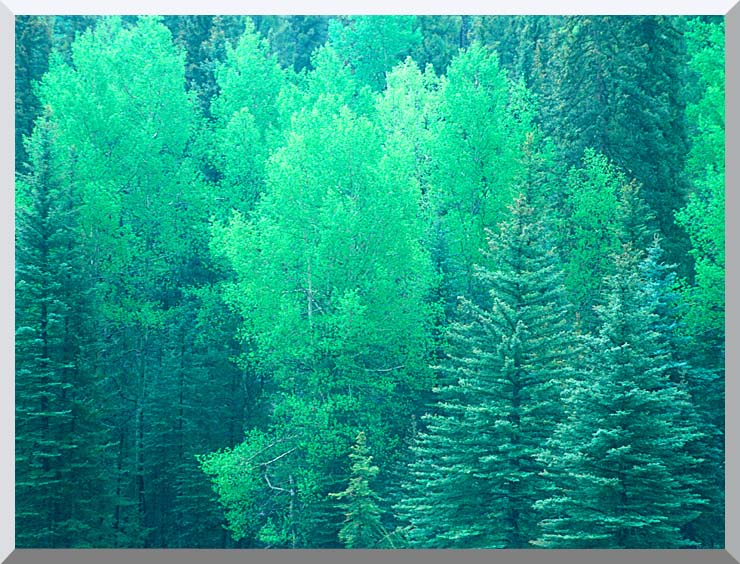 Visions of America Summer in Santa Fe National Forest, New Mexico stretched canvas art print