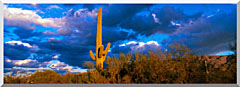 Visions of America Saguaro National Park West With Cactus stretched canvas art