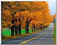 Visions of America An Autumn Road In New England stretched canvas art