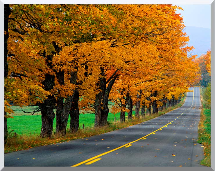 Visions of America An Autumn Road in New England stretched canvas art print