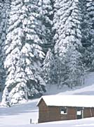 Visions of America Snow Covered Wooden Cabin in Forest, California