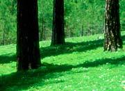 Visions of America Forest Floor at El Dorado National Forest, California