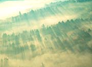 Visions of America Aerial View of Forest on a Misty Morning, Vermont