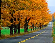 Visions of America An Autumn Road in New England