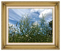 Brandie Newmon Wild Flower Field In Easthampton Massachusetts canvas with gallery gold wood frame
