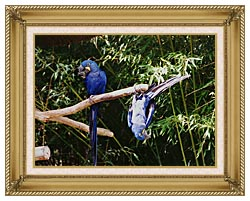 Brandie Newmon Blue Parrots Hanging Around canvas with gallery gold wood frame