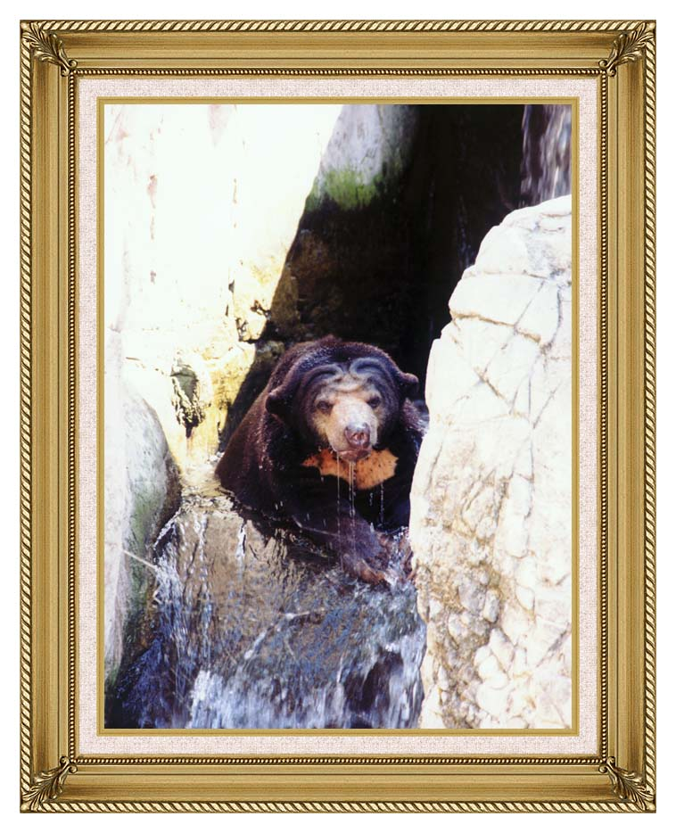 Brandie Newmon Sun Bear Cooling Off with Gallery Gold Frame w/Liner