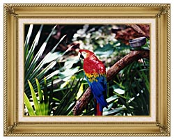 Brandie Newmon Macaw Profile canvas with gallery gold wood frame