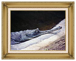 Brandie Newmon Gharial Crocodile canvas with gallery gold wood frame