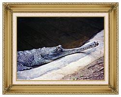 Brandie Newmon Gharial Crocodile canvas with gallery gold wood frame