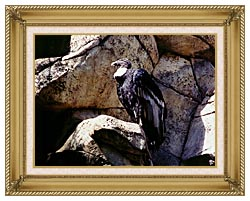 Brandie Newmon California Condor canvas with gallery gold wood frame