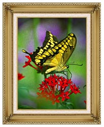 Brandie Newmon Yellow And Black Butterfly canvas with gallery gold wood frame