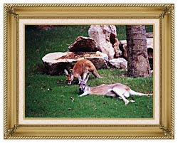 Brandie Newmon Kangaroo With Baby canvas with gallery gold wood frame