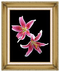 Brandie Newmon Stargazer Lily canvas with gallery gold wood frame