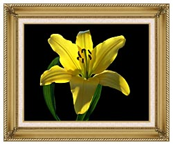 Brandie Newmon Asiatic Lily canvas with gallery gold wood frame