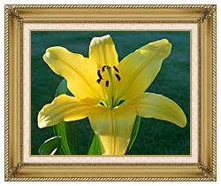Brandie Newmon Yellow Lily canvas with gallery gold wood frame