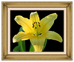 Brandie Newmon Yellow Lily Flower canvas with gallery gold wood frame