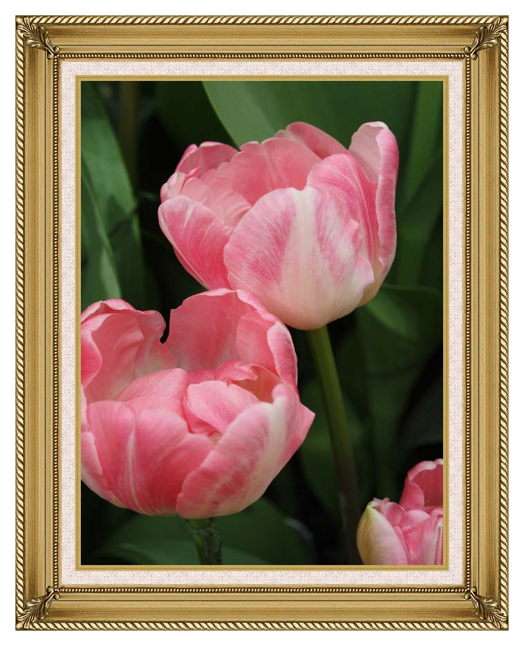 Kim O'Leary Photography Pink Tulips with Gallery Gold Frame w/Liner
