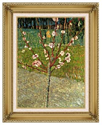 Vincent Van Gogh Almond Tree In Blossom canvas with gallery gold wood frame