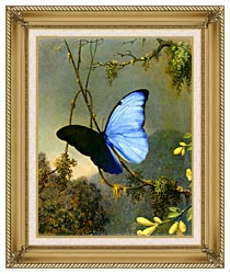 Martin Johnson Heade Blue Morpho Butterfly canvas with gallery gold wood frame